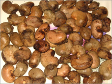 Raw-Cashew-Nuts-in-Shell